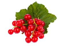 Red currant - red currant Stock Images