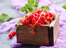 Red currant. In wooden box,stock photo stock photos