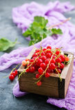 Red currant. In wooden box,stock photo stock photography