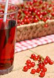 Red currant (Ribes rubrum) drink Stock Photos