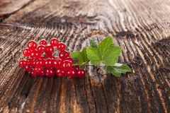 Red currant. Stock Photos