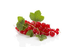Red currant. Royalty Free Stock Photo