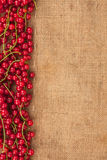 Red currant on sackcloth Stock Images