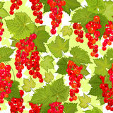 Red currant seamless pattern. Collection of berries. Vector Stock Photos