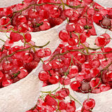 Red currant seamless pattern. Hand drawn illustration of berries on white background Stock Images