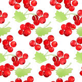 Red currant seamless pattern Royalty Free Stock Image