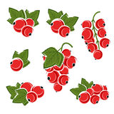 Red currant set. Vector Stock Images