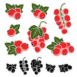 Red currant set. Vector Royalty Free Stock Images