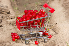 Red currant in a shopping cart Stock Photo