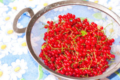 Red currant in a sieve Stock Images