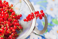 Red currant in a sieve Royalty Free Stock Images
