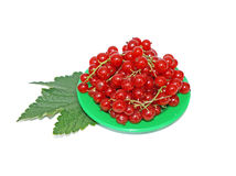 Red currant on small plates decorated with leaves isolated stock photos