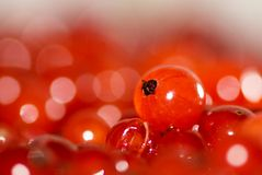 Red currant solo 2. Berry of red currant in macro Royalty Free Stock Photography
