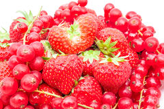 Red currant and strauberry. An fruit plate of red berries and strawberry Royalty Free Stock Images
