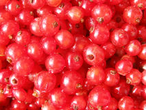 Red currant - sweet fresh summer berries Royalty Free Stock Photo