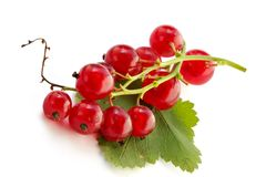 Red currant on the table Stock Photography