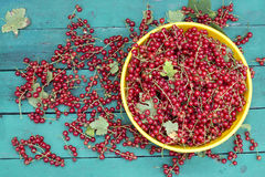Red currant on the table Stock Photo