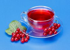 Red currant tea Stock Image