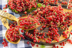 Red currant in two spoons Royalty Free Stock Image