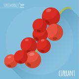 Red currant vector icon.