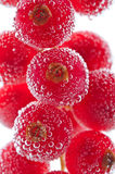 Red currant in water Stock Images