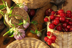 Red currant in wattled busket against background branches. With clover stock photo