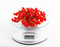 Red currant. Wheigting red currant berries on a digital electronic kitchen scale royalty free stock photos