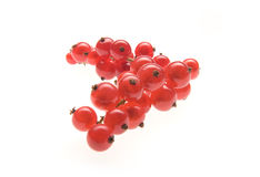 Red currant on white. Background Stock Photos