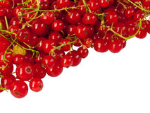 Red currant on white background Stock Photography