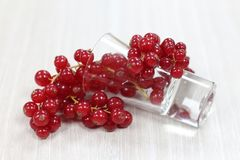 Red currant on a white background. With water glass stock photo