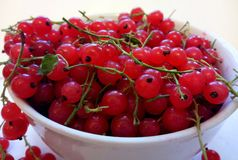 Red currant in a white cup. stock image