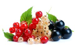 Red wihite black currant Royalty Free Stock Photo
