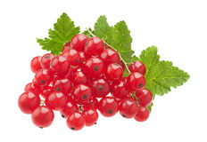 Red currant on white Stock Photography