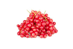 Red currant  on white background. Red currant  on white Royalty Free Stock Image