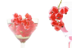 Red currant in wineglass isolated. Red currant in the wineglass isolated on white background Stock Image