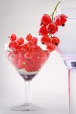 Red currant wineglass still-life Royalty Free Stock Images