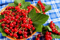 Red currant in a wooden bowl Royalty Free Stock Photos