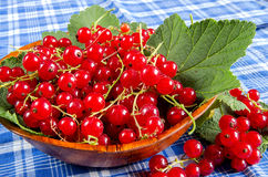 Red currant in a wooden bowl Stock Photography