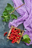 Red currant. In wooden box,stock photo royalty free stock photo