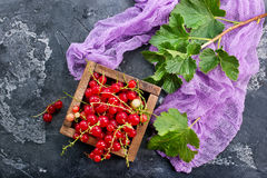 Red currant. In wooden box,stock photo royalty free stock photography