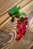 Red currant Royalty Free Stock Photos