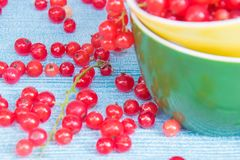 Summer colors. Red currant in a yellow and green cups on a light blue bckground royalty free stock image