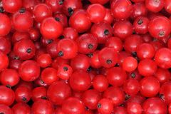 Red Currants. Background Royalty Free Stock Photo