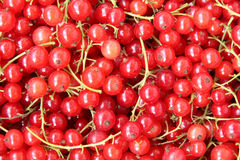 Red currants. Background of red currant. Close-up Royalty Free Stock Photo