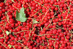 Red currants. Background of red currant with green leaf. Close-up Stock Photography