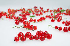 Red currants. On white background Stock Images