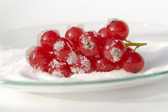 Red currants. With sugar on a glass plate Stock Images