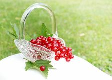 Red currants. Basket of red currants on a nature background Royalty Free Stock Photos