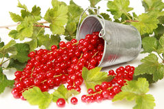 Red currants. And leaves on a white background royalty free stock photography