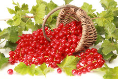 Red currants. And leaves on a white background stock photography